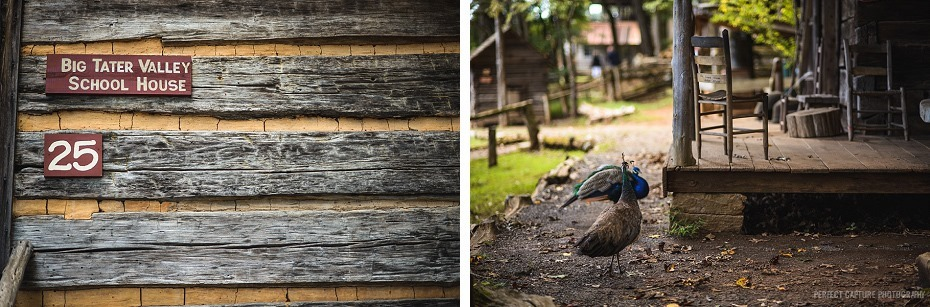 peacocks at the cabin