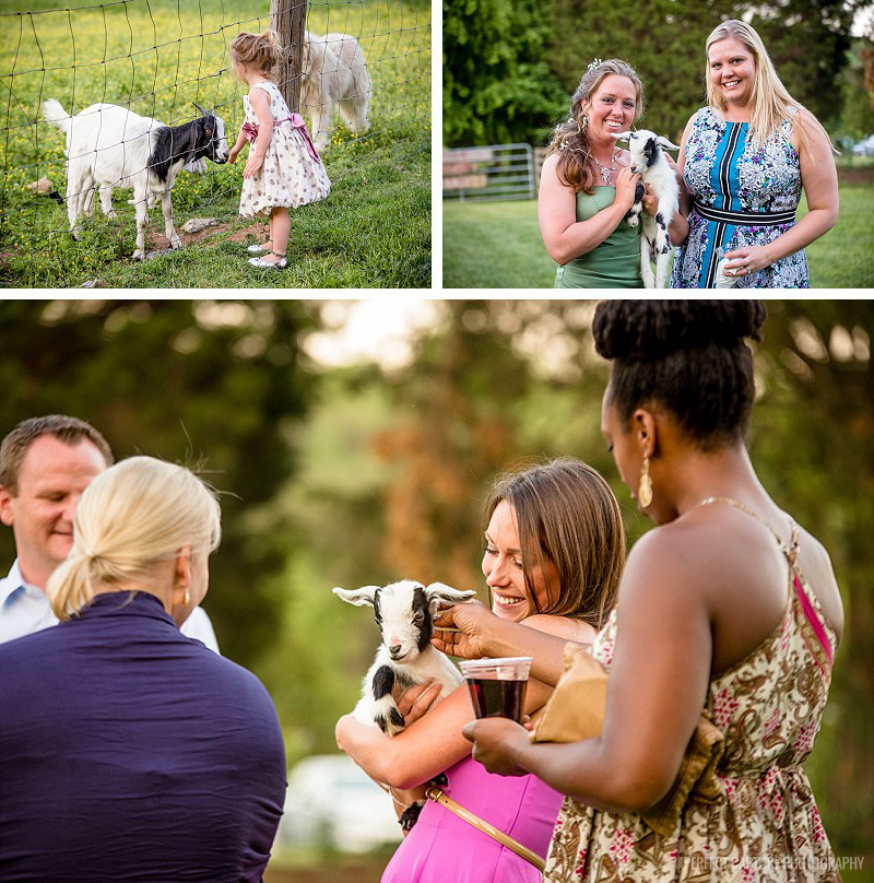 Every wedding needs a baby goat