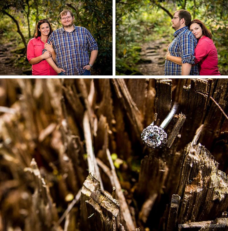 Macro ring shot on tree stump